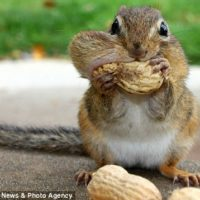 How Many Nuts Are Too Many Nuts?